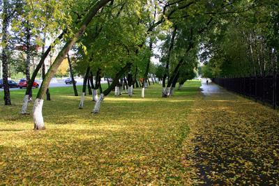 Осень в городе город, деревья, листва, москва, осень, пейзаж, сентябрь