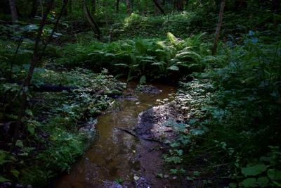 Акша лес лесная речка лето август