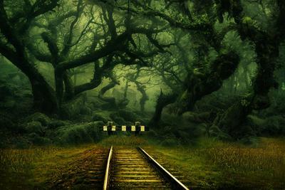 В темно-синем лесу... или размышления о бренности жизненного пути... лес путь