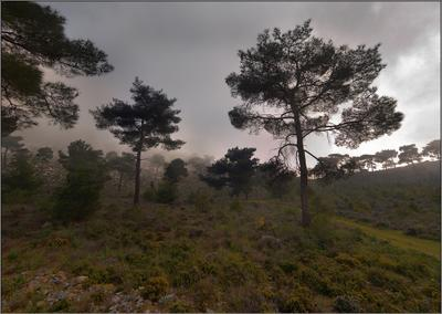 Мрачный лес.
