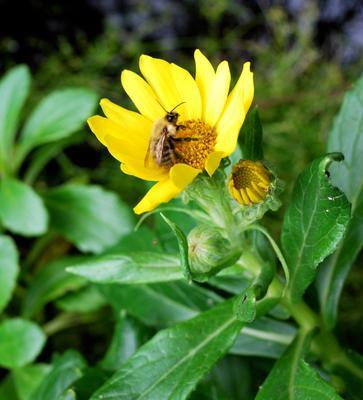 *** Сахалин морской берег Мысовая пчела