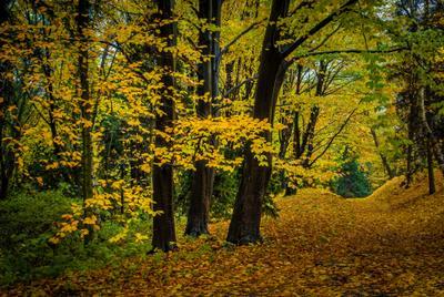 Золото осени Осень