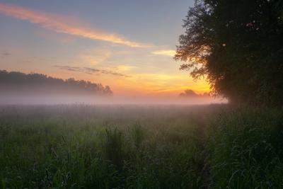 На рассвете пейзаж природа туман