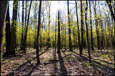 Сегодня в душе ВЕСНА ! Измайловский лес