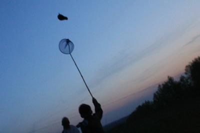 Ловля майского жука # 2