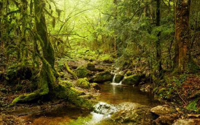 Зачарованный лес природа лес самшит краснодарский край россия мох ручей