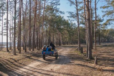 Прогулка у озера дети лес дорога повозка