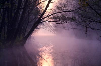 Pink Calmness утро осень пейзаж природа отражение деревья