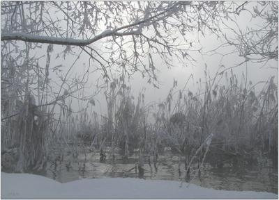 kiss... природа вода туман солнце деревья зима