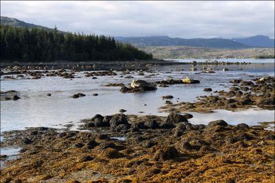 Отлив Норвегия, отлив