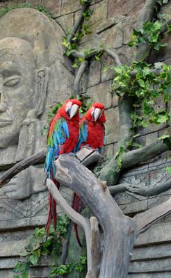 друзья праздник зоопарк попугай Ара пара
