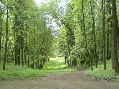 Парк Царицино парк