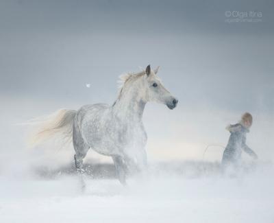 *** зима лошадь снег