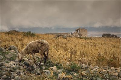 (10) Тунис Дугга развалины руины овца