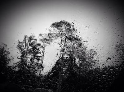 Rain дождь черно-белое капли деревья стекло