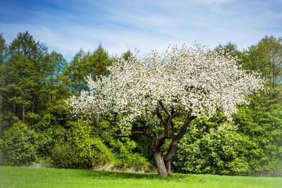 In bloom природа поле
