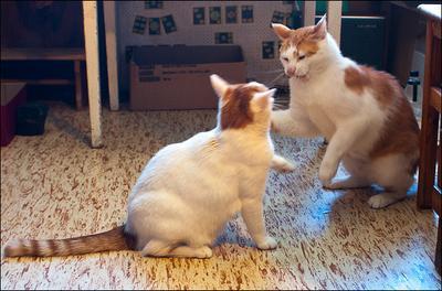Небольшие разногласия кот Макс кошка Тася