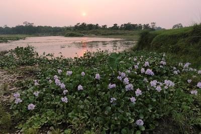Закат на реке Рапти. Непал река Рапти закат водяной гиацинт
