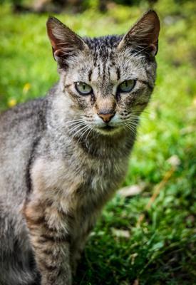 *** кот котик кошка cat