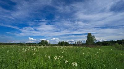 Хотылево. Луг в Июне. Bryansk Hotylevo June Meadow Heaven VladimirPochtarev Брянск Хотылево июнь луг небеса