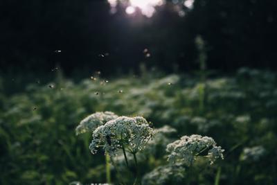 *** лето насекомые цветы трава растения