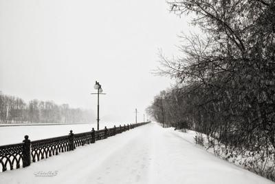Зарисовки зимы Метель лес зима снег лед берег пейзаж