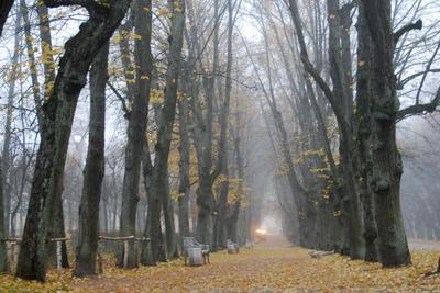Павловский парк. Вечерний туман.... Павловск парк осень туман природа
