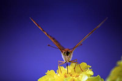 Бабочка butterfly бабочка крылья красиво маленькая