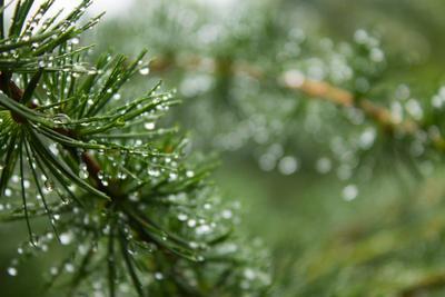 Дождевые капли дождь капли