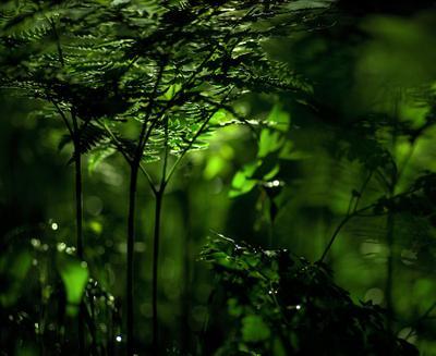 без названия папоротник зеленый лес