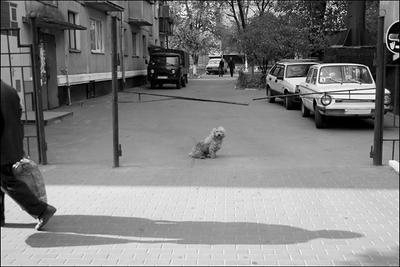 * пёс