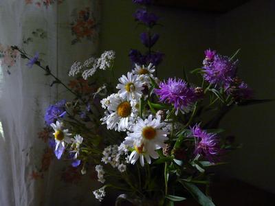 Сочный цвет... полевые цветы.
