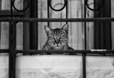 Турецкий кот кот Турция