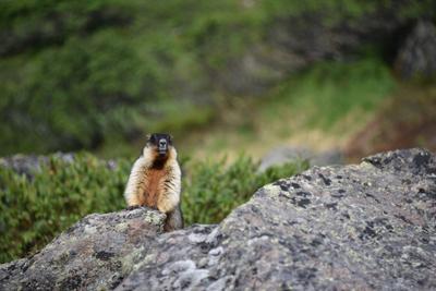 На Голубых озёрах Природа Камчатка
