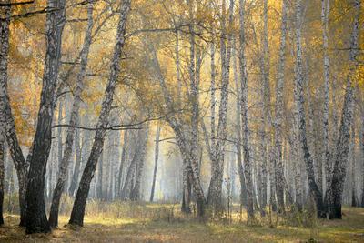 А.С. Пушкин. «Осенняя пора! Очей очарованье!» Лес осень утро туман березы деревья листья