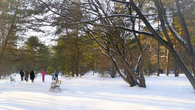 Субботний день в Серебряном Бору... Серебряный Бор зима февраль лыжники москвичи