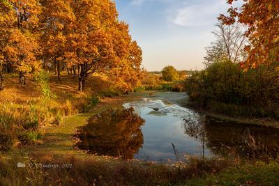 Осенняя картина осенний пейзаж озеро