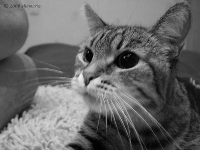 Она. ...инопланетная Она кошка Чопа глаза инопланетная