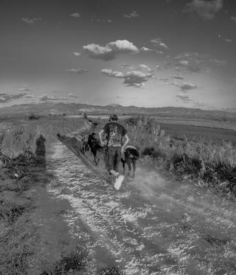 Бегущий пастух