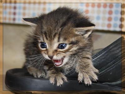 Сюрприз! котенок, бездомные животные, кот, кошка