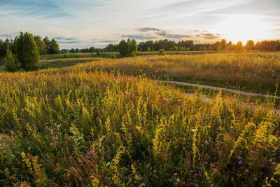 *** природа пейзаж лето вечер луга татарстан дубровка