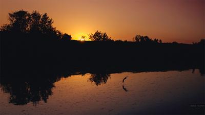 Calmness москва закат река птица пейзаж красив