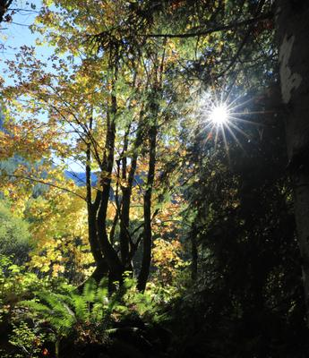 Золотой лес Осень