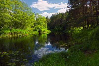 В июне на Орше лето река деревья вода кусты небо