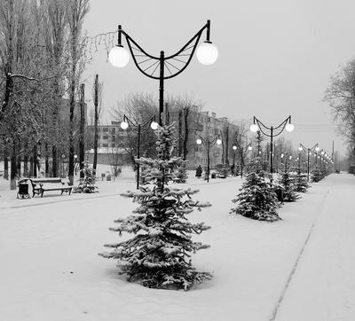 Декабрьский день, п .Светлый ,Саратовская область