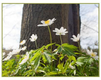 Весенняя симметрия весна