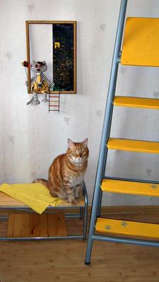 2 года как его нашли в капусте поздравление кот подарок