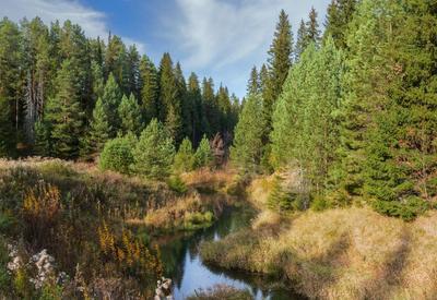 В осеннем лесу Склон речка лес сосны деревья листья краски осень облака