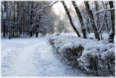 Утро нового года Сокольники