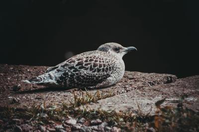 lonely bird птица клюв